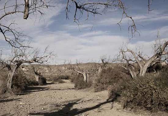 © Alvaro Deprit. Almeria, Andalusia, Dicembre 2011. Deserto di Tabernas. Courtesy l'autore