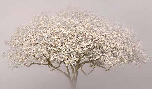 © Irene Kung. Magnolia. Inchiostro su carta cotone 100x170cm