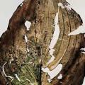 © Nino Migliori. Herbarium