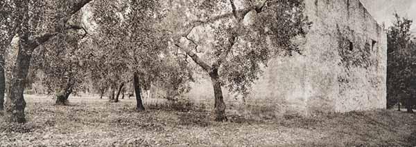 © Antonella D'Onorio De Meo e Luca Cappellaro. Da Se non avessi visto
